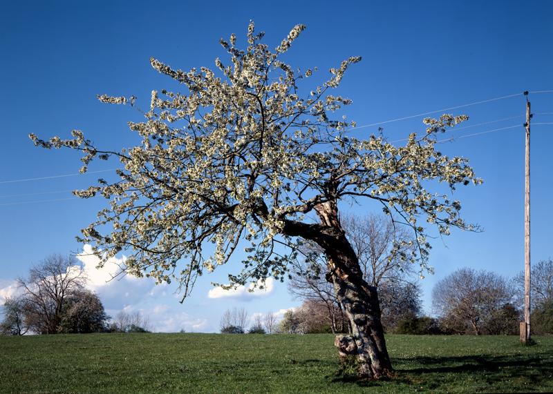 1318-tree